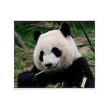 Panda Blankets