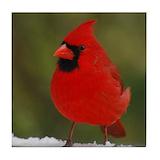 Cardinal tiles Drink Coasters