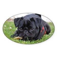 Pug dog Decal