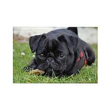 Pug dog Magnets