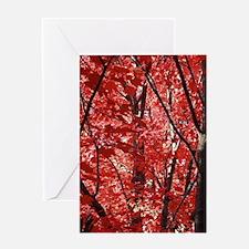 Maple Tree Peoria Illinois Greeting Cards