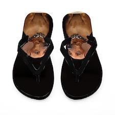 Dachshund Dog Flip Flops