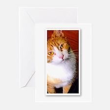 camara playPlease Greeting Cards (Pk of 10)