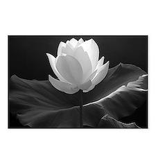 Lotus Flower en Noir Postcards (Package of 8)