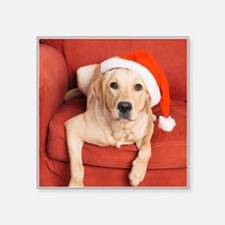 Dog with Christmas hat on armchair Sticker