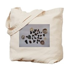 Fossilized Sharks Teeth And Shells Tote Bag