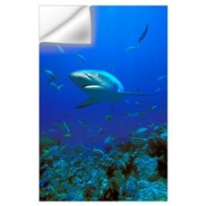 Caribbean Reef Shark (Carcharhinus Perezi) Wall Decal