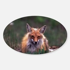 Red Fox Oval Decal