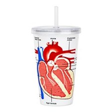 Unique Infographic Acrylic Double-wall Tumbler