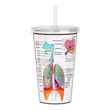 Cute Anatomy chart Acrylic Double-wall Tumbler