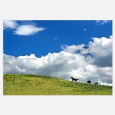 Horses Galloping On Hill