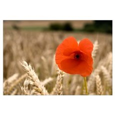 Red Flower In Field Canvas Art