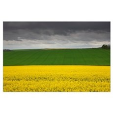 Fields; North Yorkshire, England Poster