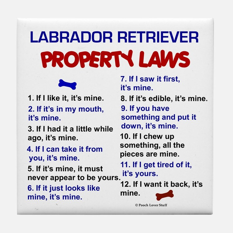 Labrador Retriever Property Laws 3 Tile Coaster