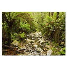 Creek Running Through The Rainforest, Victoria, Au Canvas Art