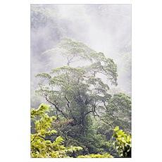 Mist Over A Rainforest, Republic Of Costa Rica Poster