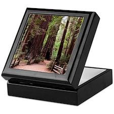 Henry Cowell Redwoods ~ Keepsake Box