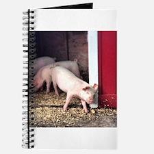 Little Pig Journal