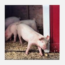 Little Pig Tile Coaster