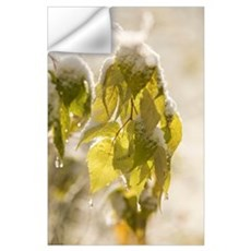 Green Leaves Covered With Snow And Ice; Thunder Ba Wall Decal