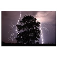 Lightning Strikes In The Sky Behind A Tree; Albert Poster