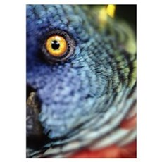 Parrot, Close Up; Caribbean Islands Poster