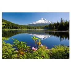 Reflection Of Mount Hood In Trillium Lake In The O Framed Print