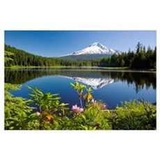 Reflection Of Mount Hood In Trillium Lake In The O Poster