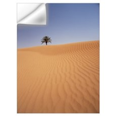 Solitary Date Palm Tree In The Sand Dunes, Tinfou  Wall Decal