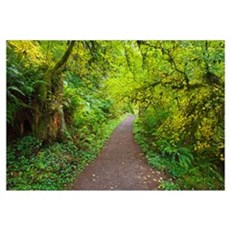 A Trail In Silver Falls State Park; Oregon, United Framed Print