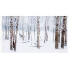 A Horse Stands Beside A Forest Of Bare Trees In Wi Poster