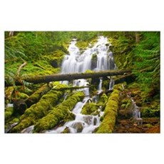 Proxy Falls In Willamette National Forest; Oregon, Poster