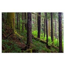 Temperate Rain Forest, Vancouver Island, British C Poster