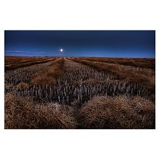 Autumn Moonrise On Canola Swaths, Alberta, Canada Poster