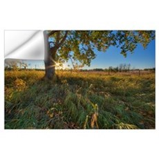 Early Evening Under An Old Poplar Tree North Of Ed Wall Decal