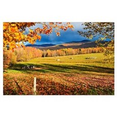 Fall Colours, Cows In Field And Mont Sutton, Sutto Poster