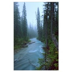 Fog Over The Emerald River, Yoho National Park, Br Poster