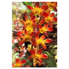 Close-Up Of Red And Yellow Dendrobium Orchids On P Framed Print