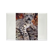 Cute Snow leopard cub Rectangle Magnet (10 pack)