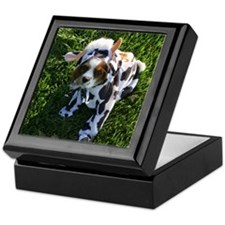 Cavalier Cow Keepsake Box