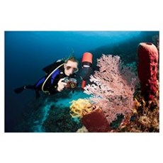 Indonesia, Diver taking a picture of a crinoid on  Poster