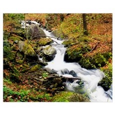 River With Fallen Autumn Leaves In The Forest Poster