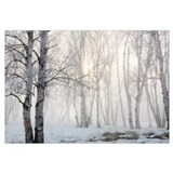 Birch trees Wrapped Canvas Art