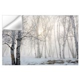 Birch trees Wall Decals