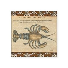 Vintage Maine Lobster scientific illustration Stic