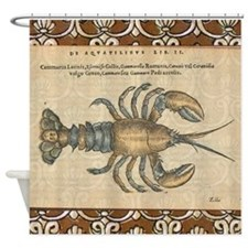 Vintage Maine Lobster scientific illustration Show