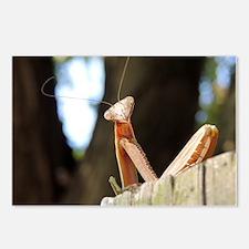 Cool Praying mantis Postcards (Package of 8)