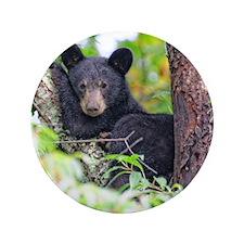 "Bear Cub relaxing in Tree 3.5"" Button"