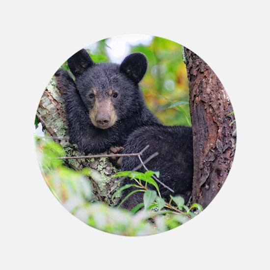 "Bear Cub relaxing in Tree 3.5"" Button"