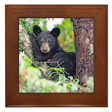 Bear Cub relaxing in Tree Framed Tile